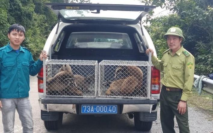 Vườn Quốc gia Phong Nha - Kẻ Bàng: Thả động vật hoang...